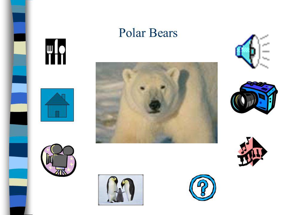 Penguins and Polar Bears Hypermedia Instruction Fall 2002