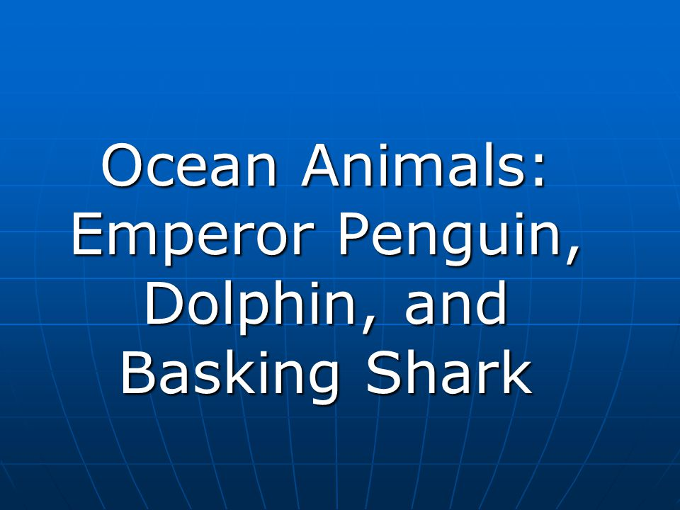 Ocean Animals: Emperor Penguin, Dolphin, and Basking Shark
