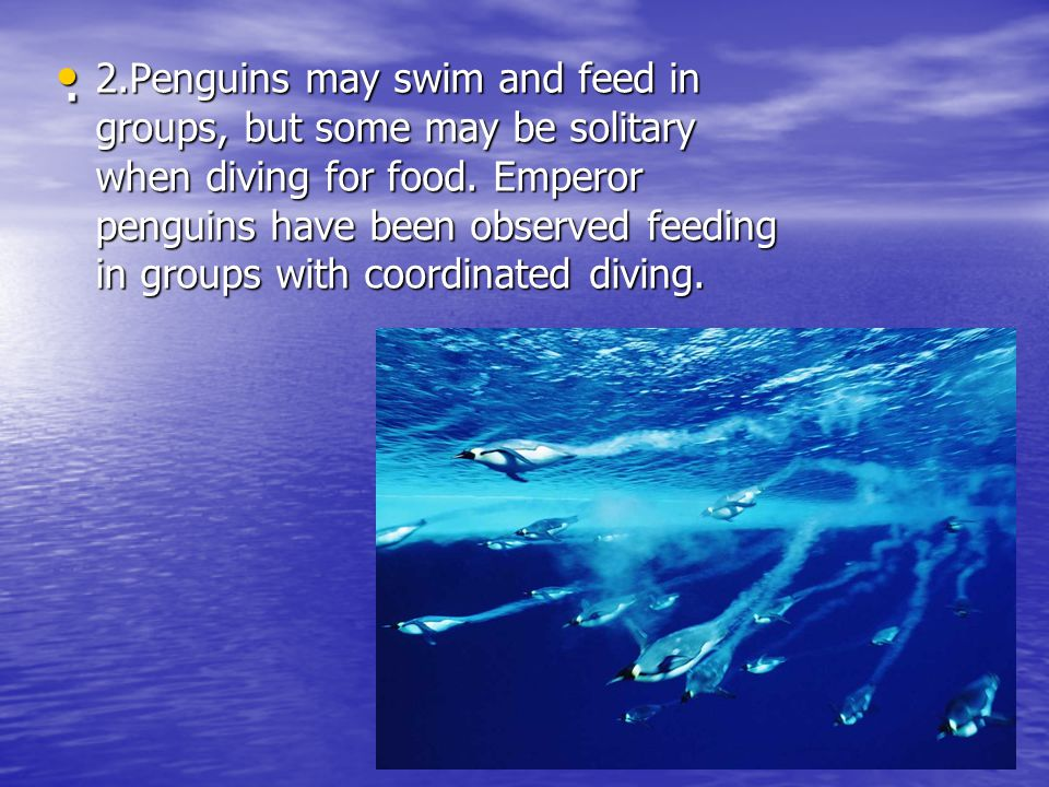 . 2.Penguins may swim and feed in groups, but some may be solitary when diving for food. Emperor penguins have been observed feeding in groups with co