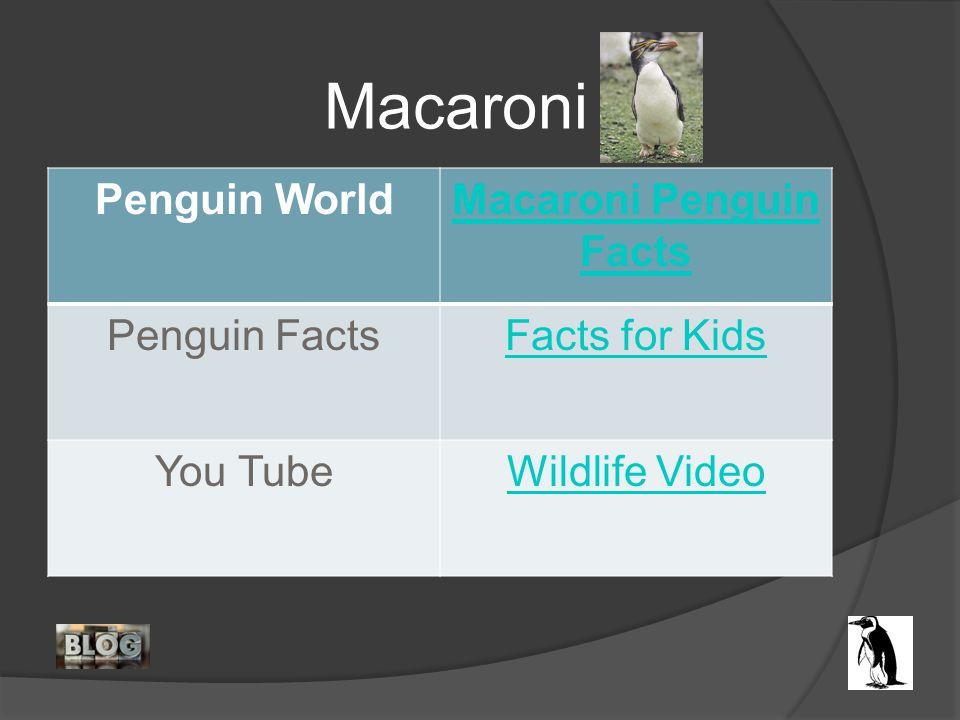 Penguin WorldMacaroni Penguin Facts Penguin FactsFacts for Kids You TubeWildlife Video Macaroni