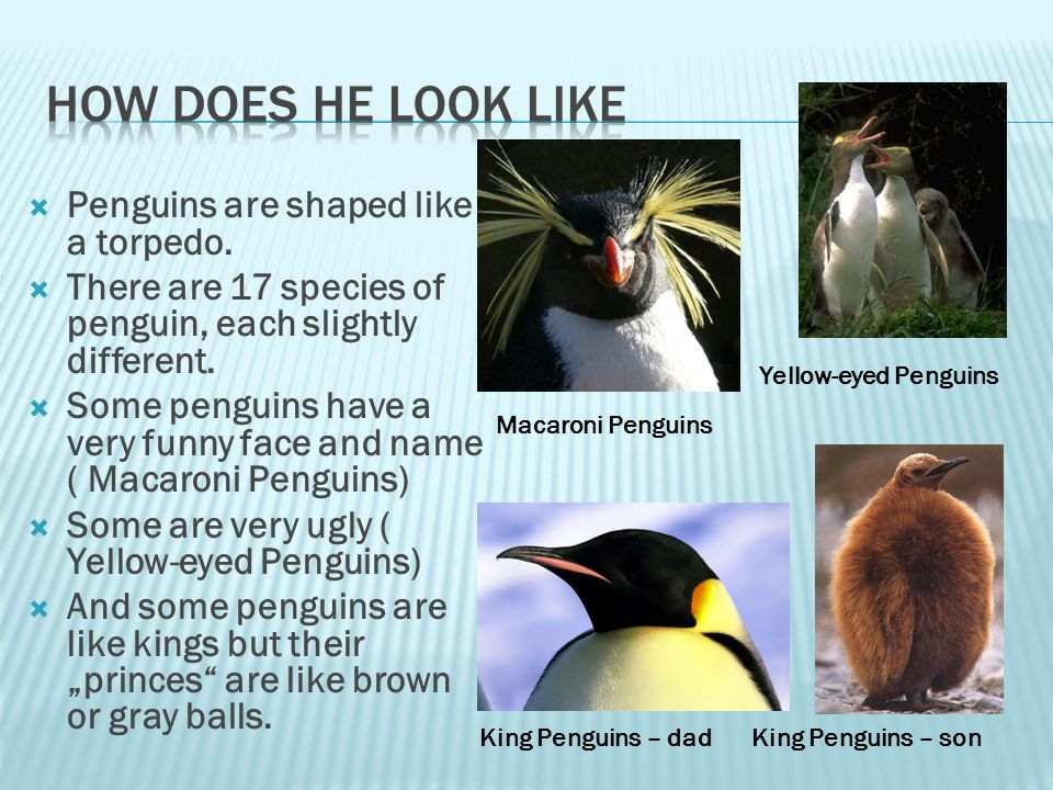  All of the species penguins live in the Southern hemisphere.