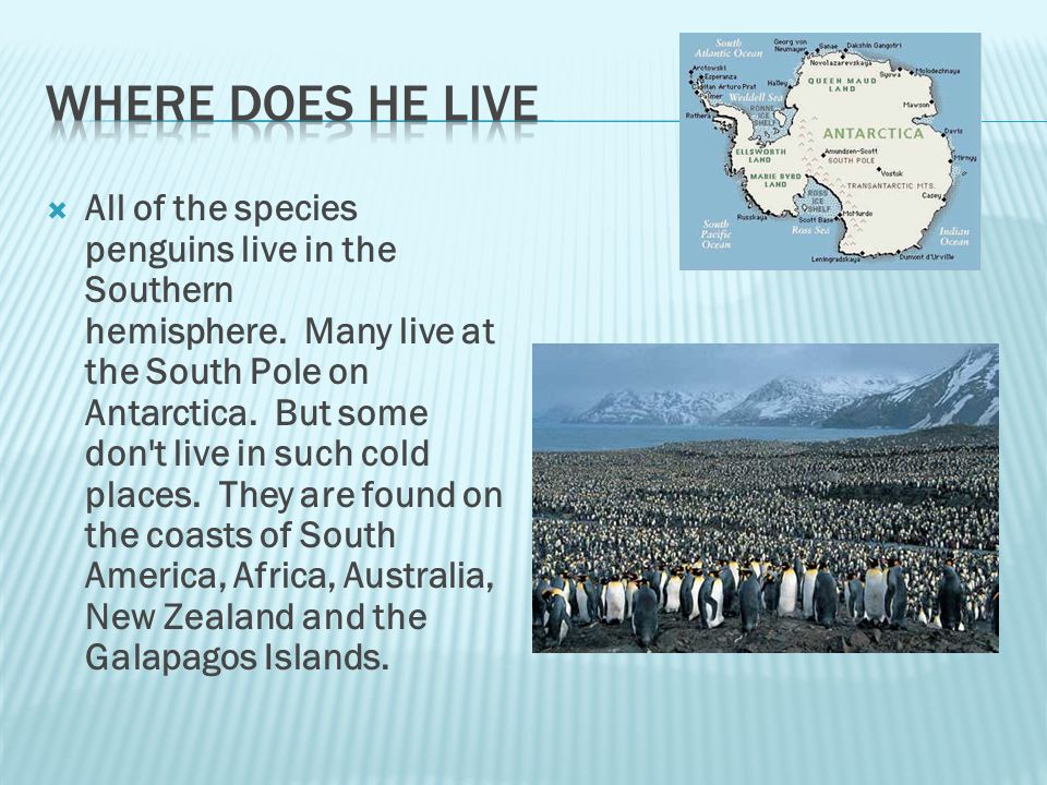  Penguins eat seafood.