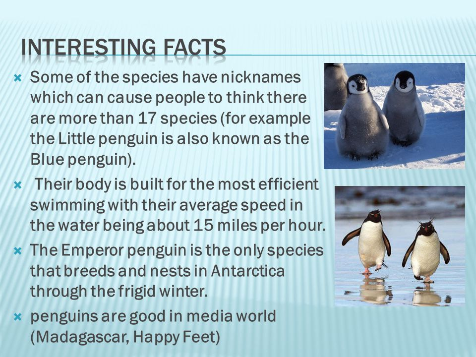  Some of the species have nicknames which can cause people to think there are more than 17 species (for example the Little penguin is also known as the Blue penguin).
