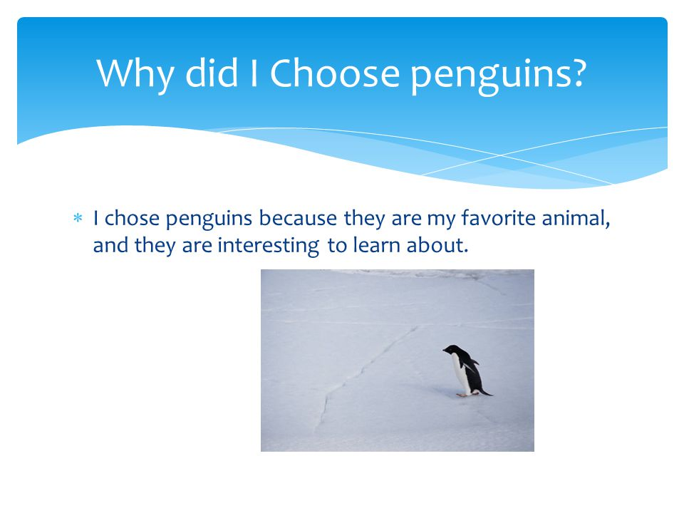  There are penguins with different shapes and sizes and colors.
