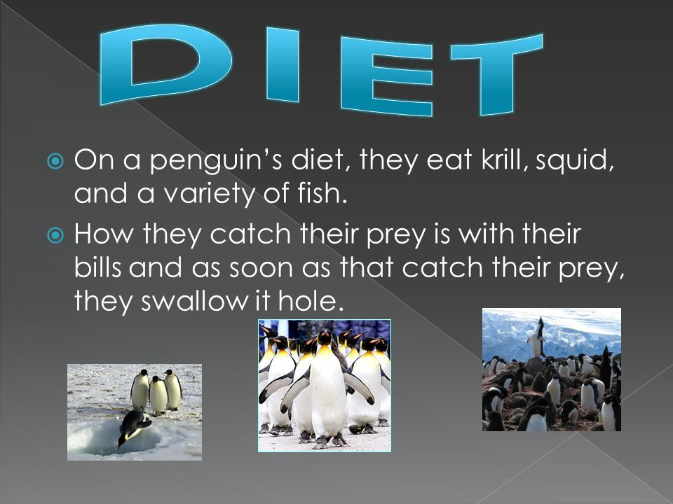  On a penguin's diet, they eat krill, squid, and a variety of fish.