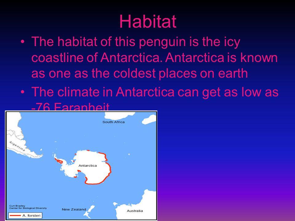 Habitat The habitat of this penguin is the icy coastline of Antarctica.
