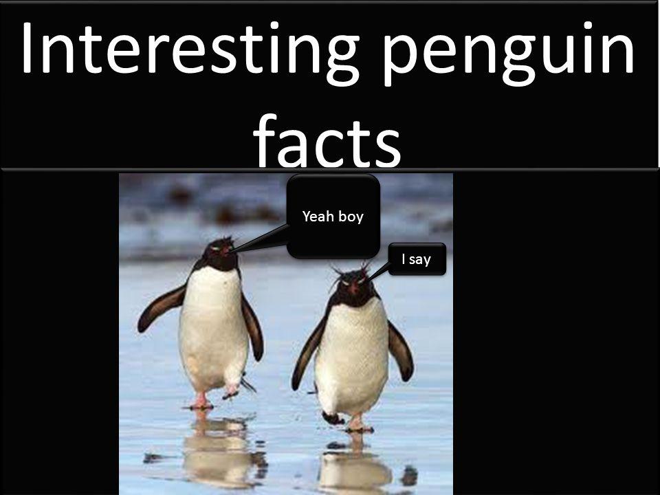 Interesting penguin facts Yeah boy I say
