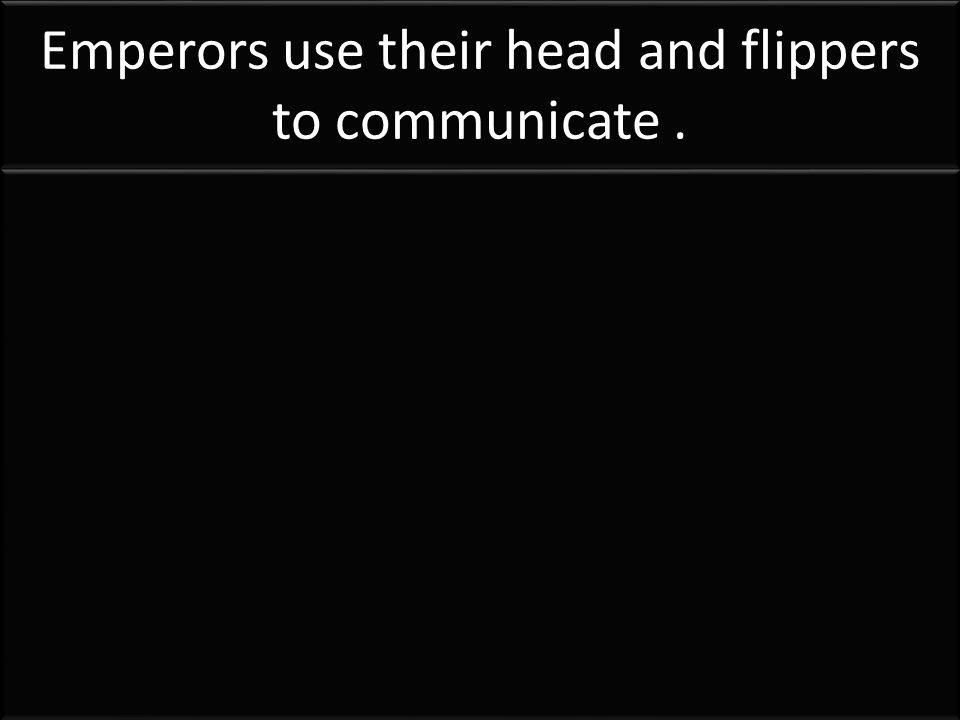 Emperors use their head and flippers to communicate.