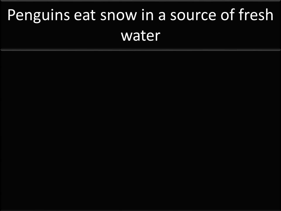 Penguins eat snow in a source of fresh water