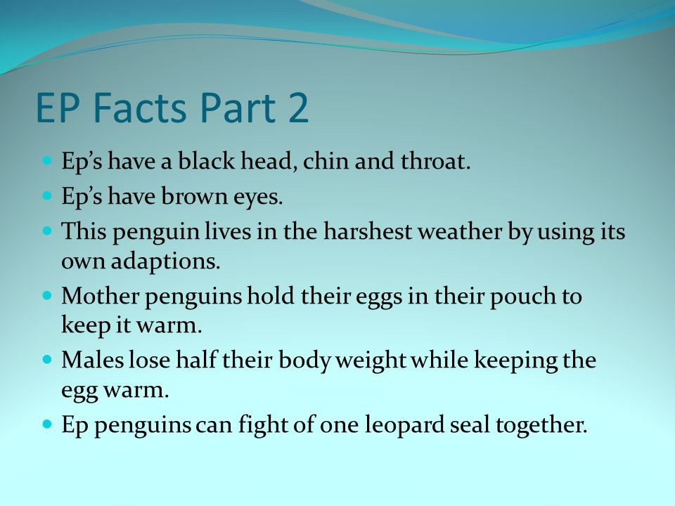 EP Facts Part 2 Ep's have a black head, chin and throat.