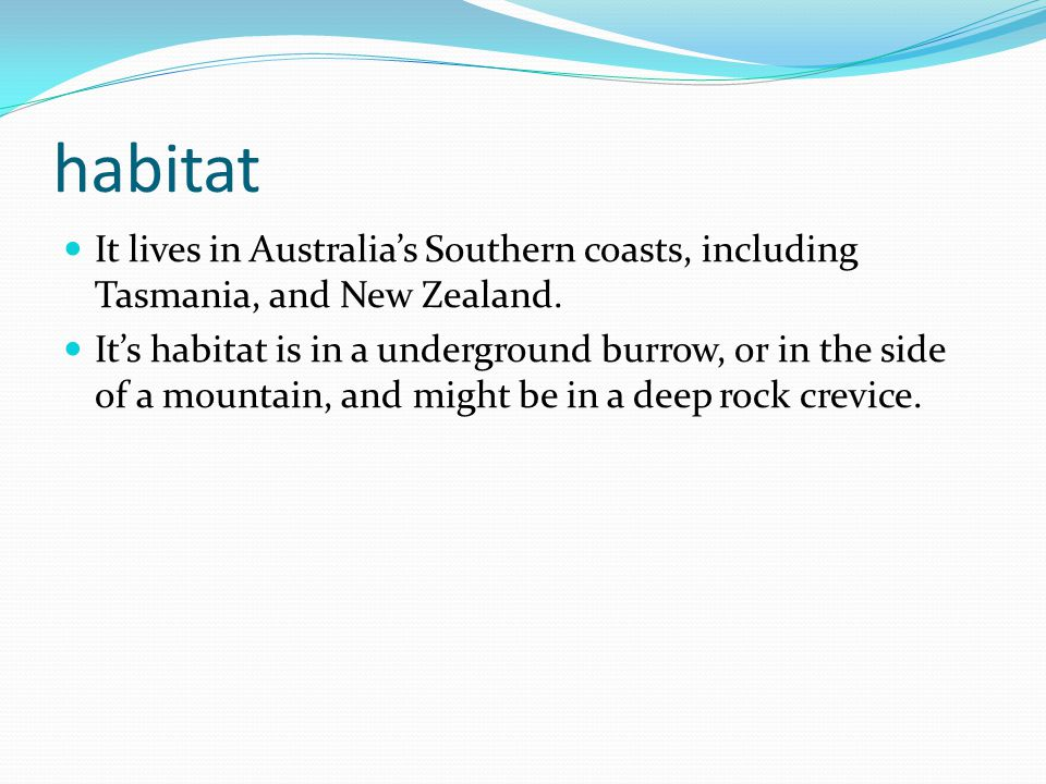 habitat It lives in Australia's Southern coasts, including Tasmania, and New Zealand.