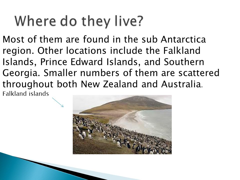 Most of them are found in the sub Antarctica region.