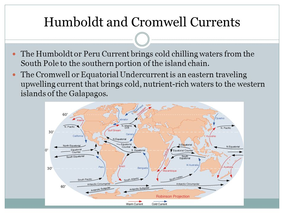 Humboldt and Cromwell Currents The Humboldt or Peru Current brings cold chilling waters from the South Pole to the southern portion of the island chai