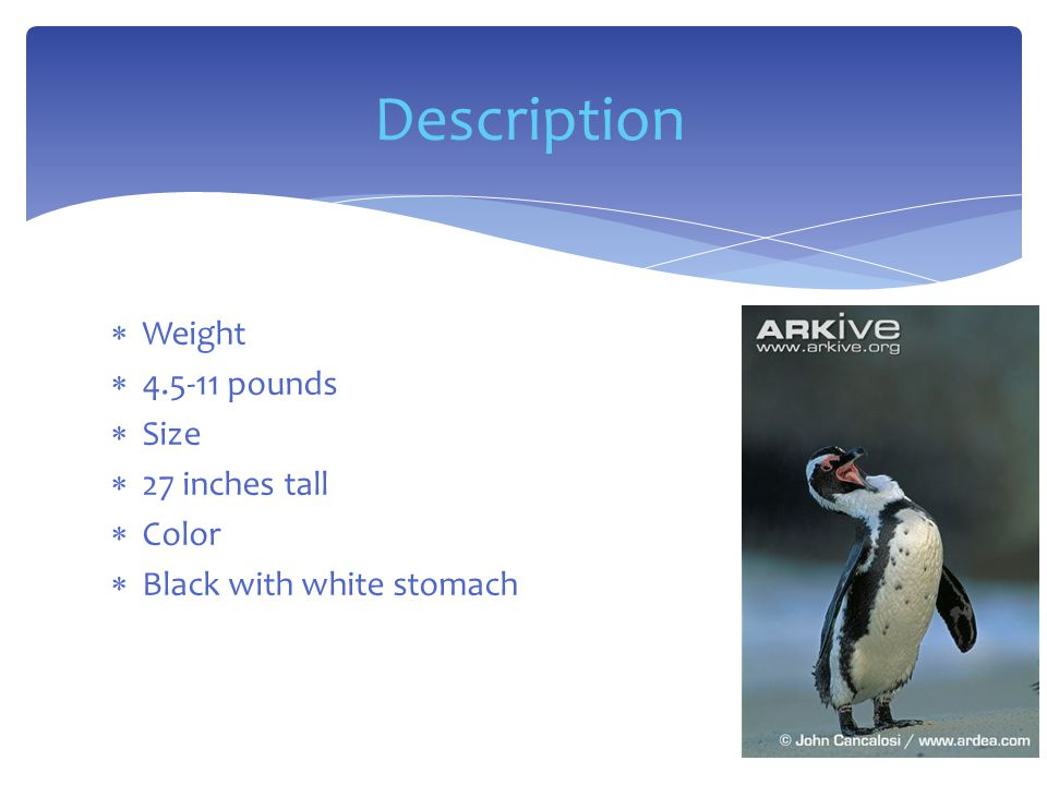 Weight  4.5-11 pounds  Size  27 inches tall  Color  Black with white stomach Description