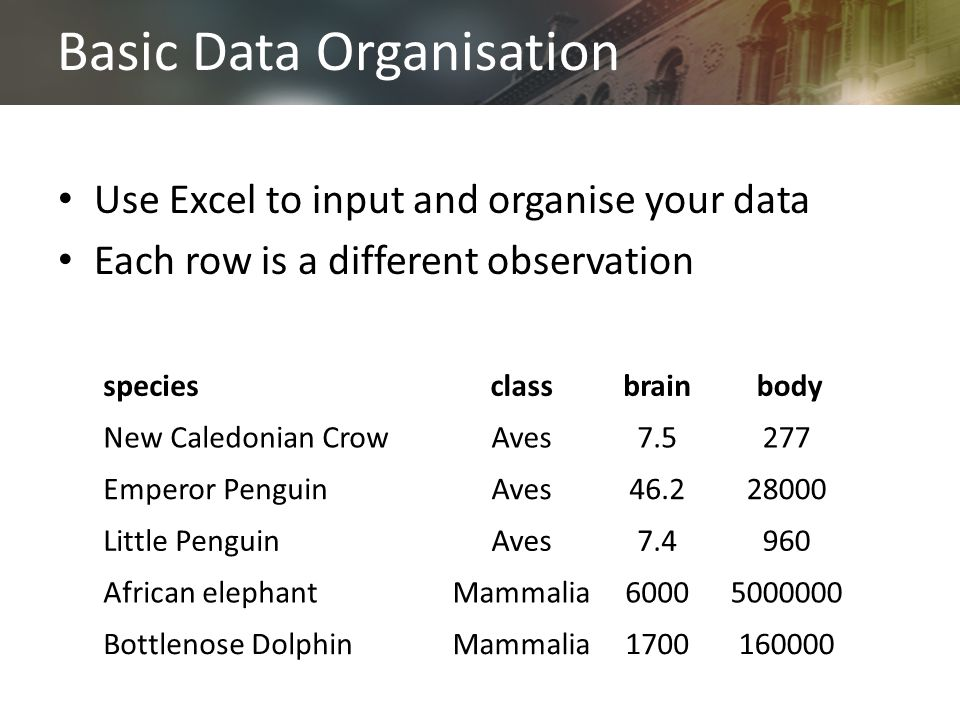 Basic Data Organisation Use Excel to input and organise your data Each row is a different observation speciesclassbrain body New Caledonian CrowAves7.5277 Emperor PenguinAves46.228000 Little PenguinAves7.4960 African elephantMammalia60005000000 Bottlenose DolphinMammalia1700160000