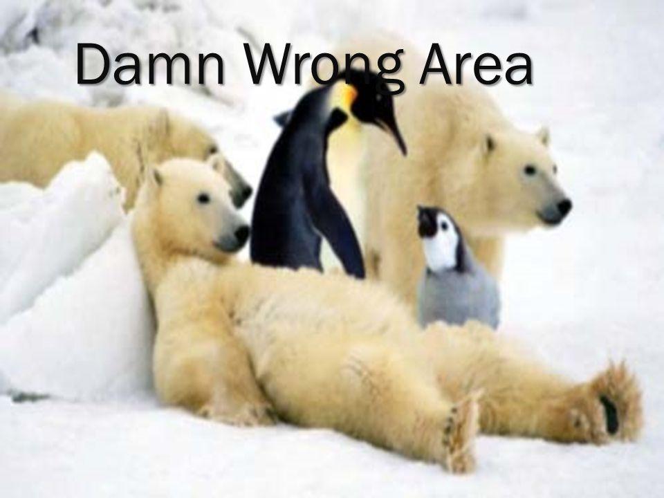 Damn Wrong Area