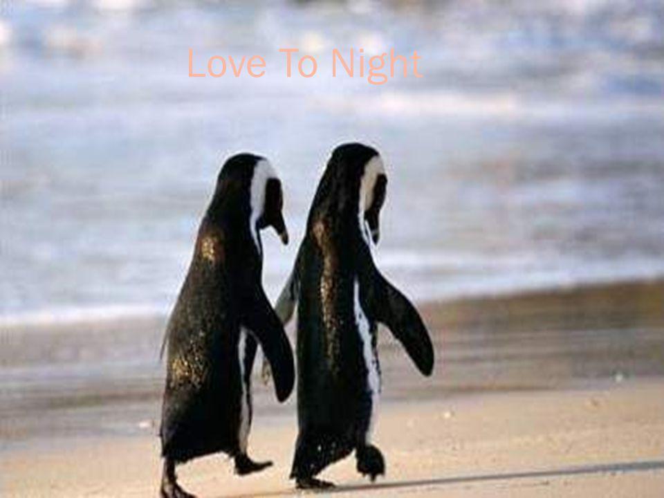 Love To Night