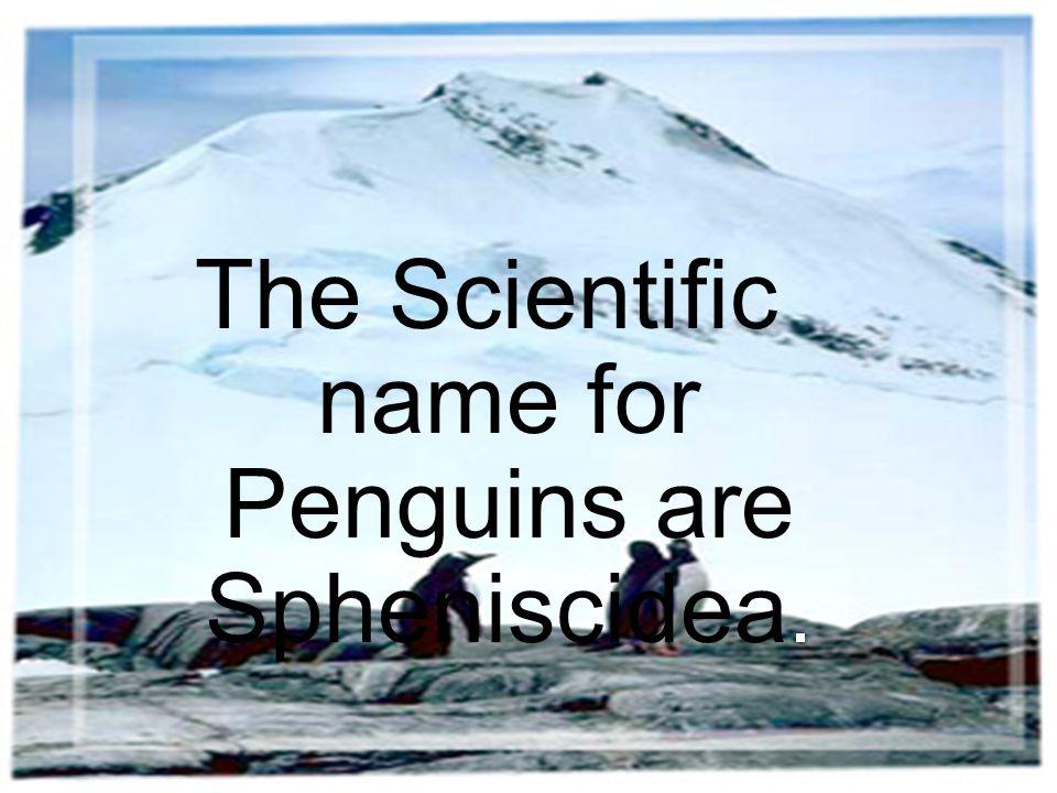 The Scientific name for Penguins are Spheniscidea.