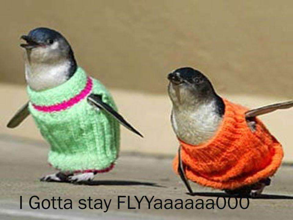 I Gotta stay FLYYaaaaaa000