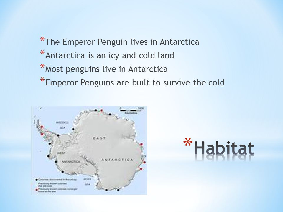 * The Emperor Penguin lives in Antarctica * Antarctica is an icy and cold land * Most penguins live in Antarctica * Emperor Penguins are built to surv