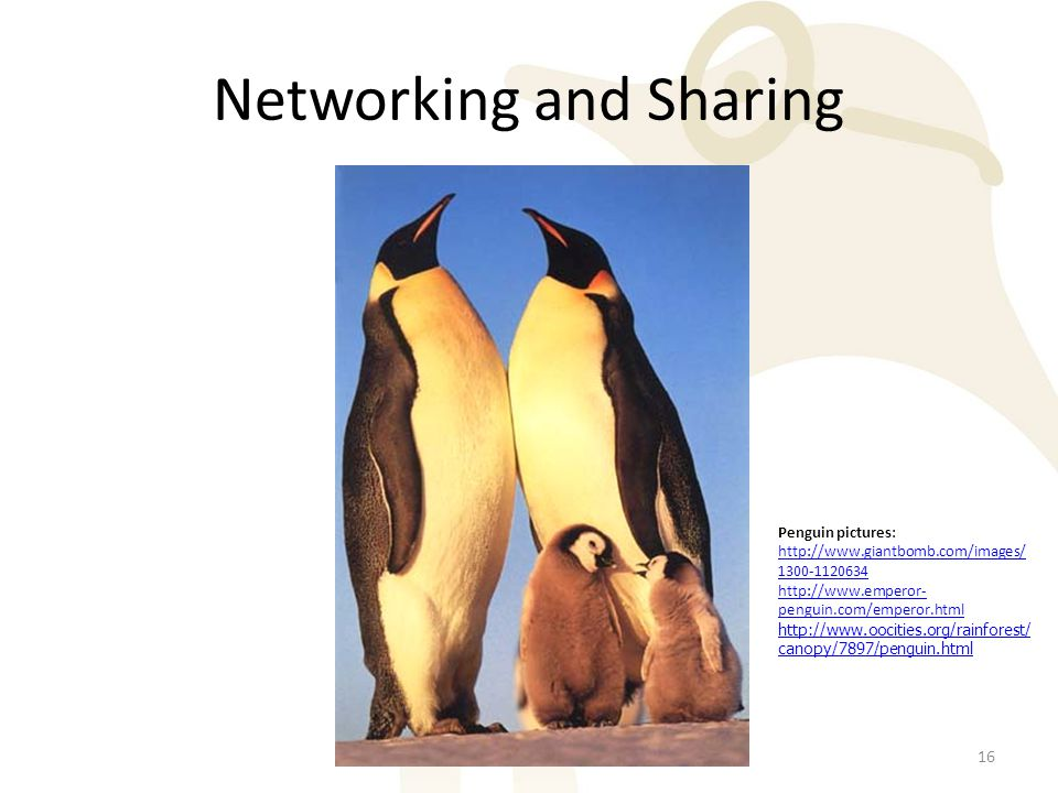 Networking and Sharing 16 Penguin pictures: http://www.giantbomb.com/images/ 1300-1120634 http://www.emperor- penguin.com/emperor.html http://www.oocities.org/rainforest/ canopy/7897/penguin.html