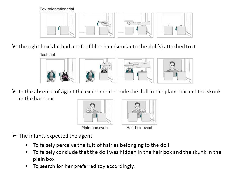  the right box's lid had a tuft of blue hair (similar to the doll's) attached to it  In the absence of agent the experimenter hide the doll in the plain box and the skunk in the hair box  The infants expected the agent: To falsely perceive the tuft of hair as belonging to the doll To falsely conclude that the doll was hidden in the hair box and the skunk in the plain box To search for her preferred toy accordingly.