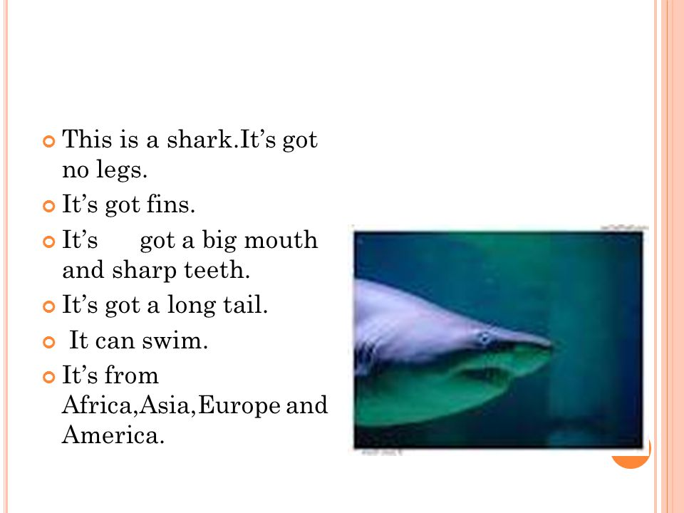This is a shark.It's got no legs. It's got fins. It's got a big mouth and sharp teeth.
