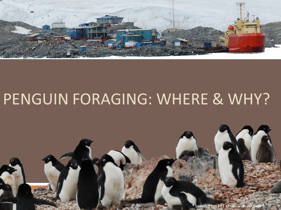 PENGUIN FORAGING: WHERE & WHY * Lesson Plan PPT to use with students *