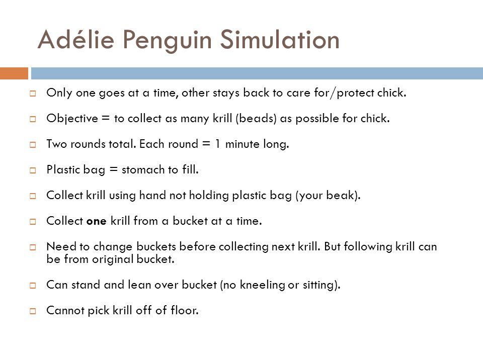 Adélie Penguin Simulation  Only one goes at a time, other stays back to care for/protect chick.