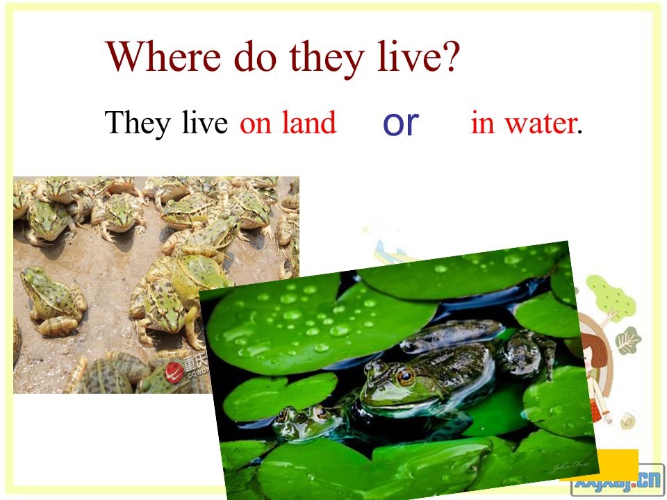 Where do they live They live in water. Live [l ɪ v]