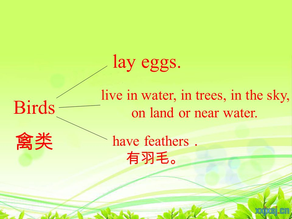 in trees in the sky near water on land Birds live in water, in trees, in the sky, on land or near water.