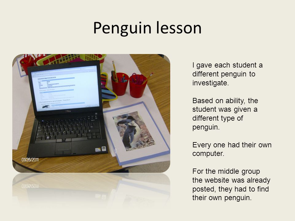 Penguin lesson I gave each student a different penguin to investigate.