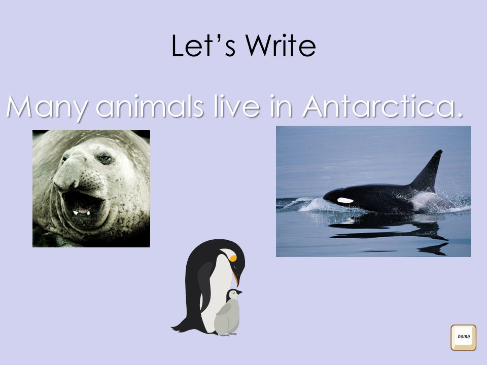 Let's Write Many animals live in Antarctica.