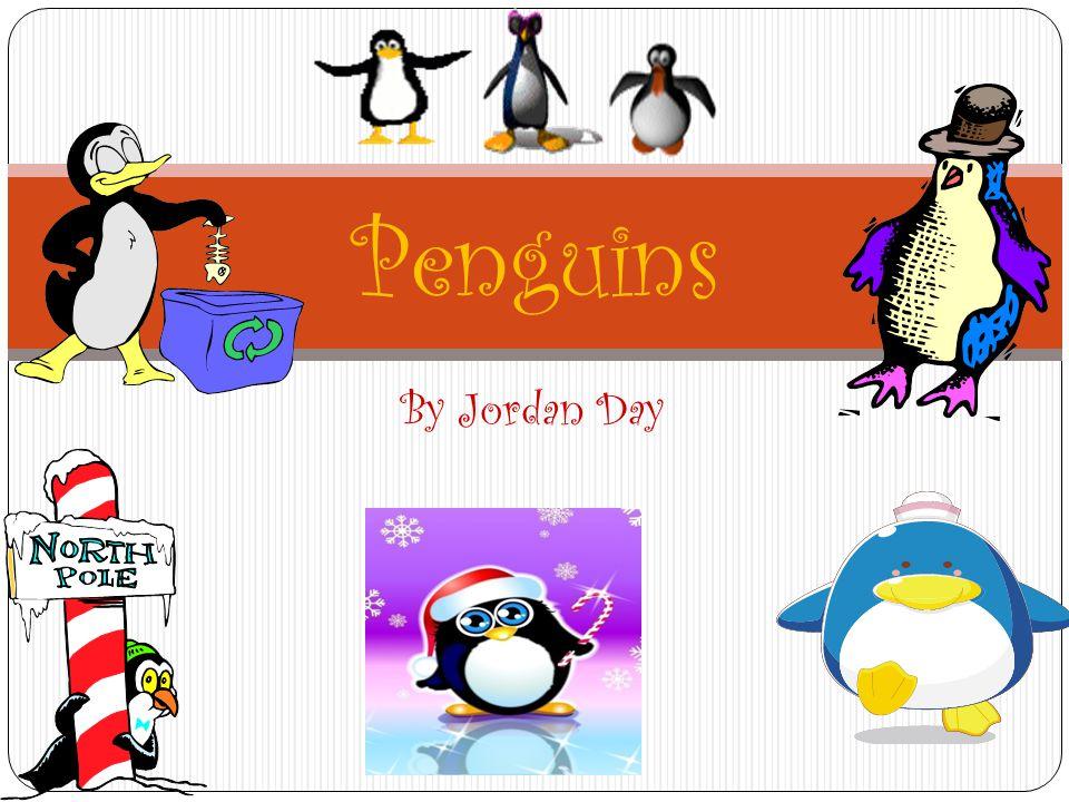 By Jordan Day Penguins