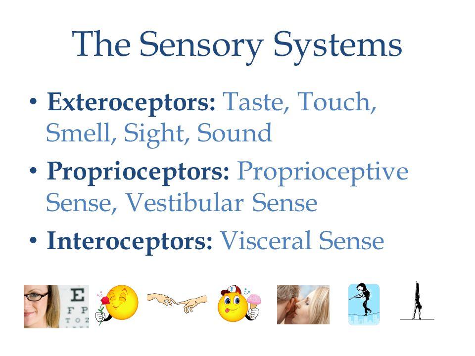 The Sensory Systems Exteroceptors: Taste, Touch, Smell, Sight, Sound Proprioceptors: Proprioceptive Sense, Vestibular Sense Interoceptors: Visceral Sense
