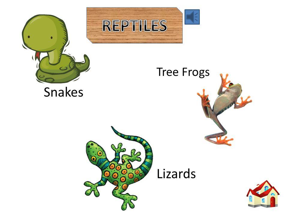 Reptiles Birds Mammals Fish