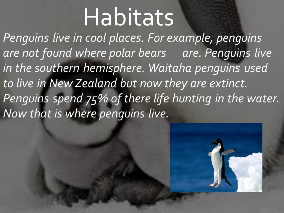 Penguins live in cool places. For example, penguins are not found where polar bears are.