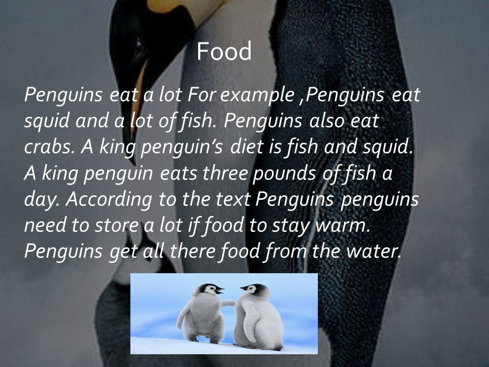 Penguins eat a lot For example,Penguins eat squid and a lot of fish.