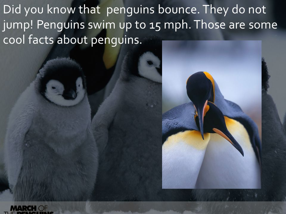 Did you know that penguins bounce. They do not jump.