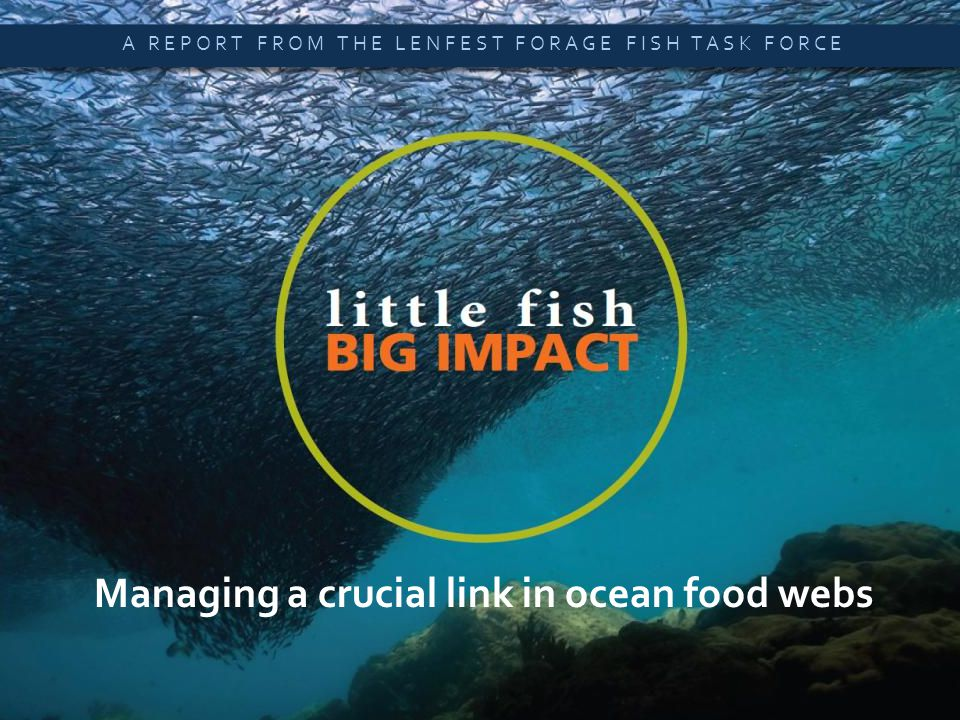 Little Fish, Big Impact  A SUMMARY OF NEW SCIENTIFIC ANALYSIS Managing a crucial link in ocean food webs A REPORT FROM THE LENFEST FORAGE FISH TASK FORCE