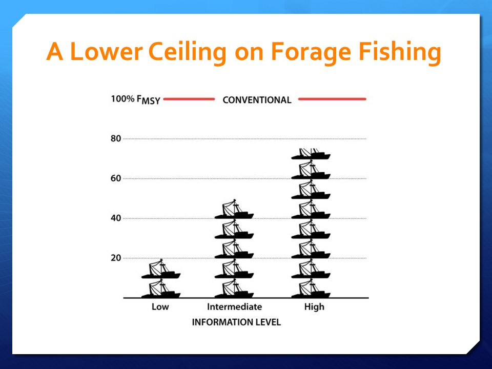 A Lower Ceiling on Forage Fishing