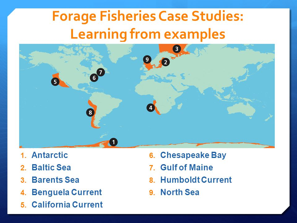 Economic Value of Forage Fish FORAGE FISH DIRECT VALUE FORAGE FISH SUPPORTIVE VALUE Direct value of commercial catch = $5.6 billion Supportive commercial value= $11.3 billion Total global commercial value= $16.9 billion Value in 2006 dollars First ever estimate of total value of forage fish to all fisheries