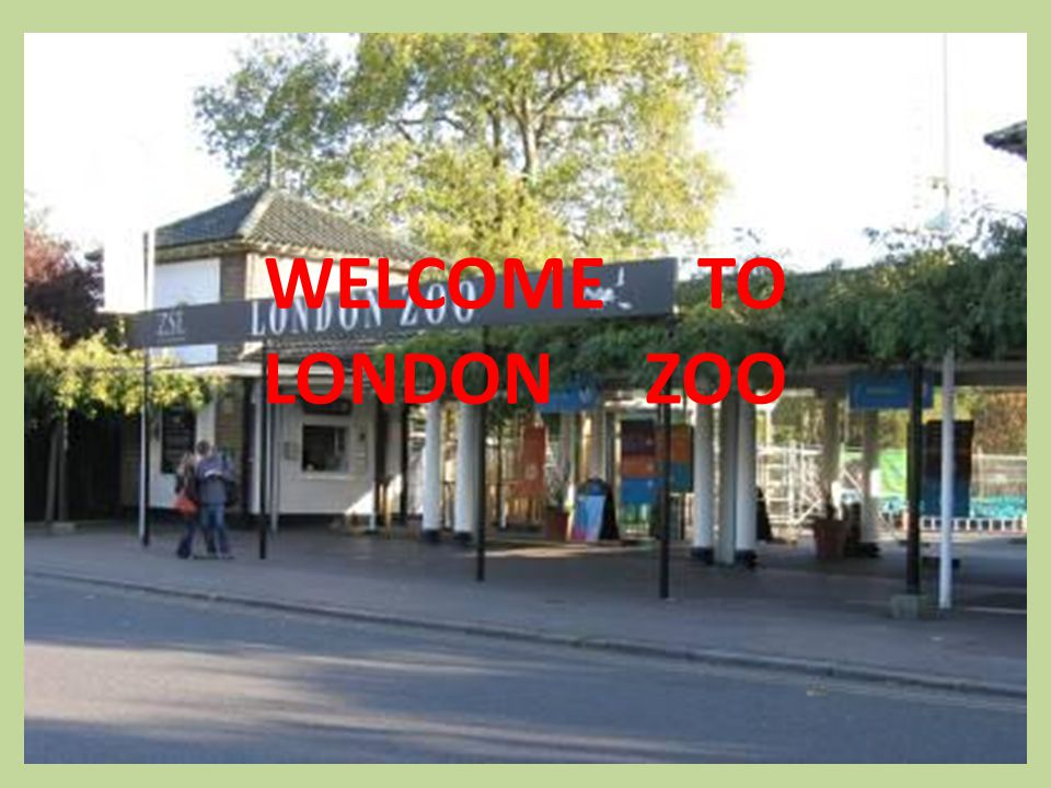 London Zoo is one of the most famous of all London attractions.