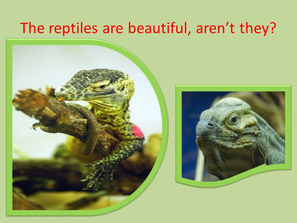 The reptiles are beautiful, aren't they