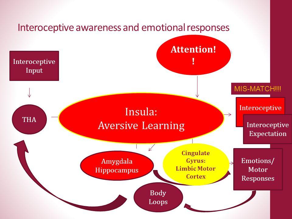 Interoceptive awareness and emotional responses Emotions/ Motor Responses Interoceptive Input THA pINS mIN S aINS Orbitofrontal PFC dACC Amygdala Hipp