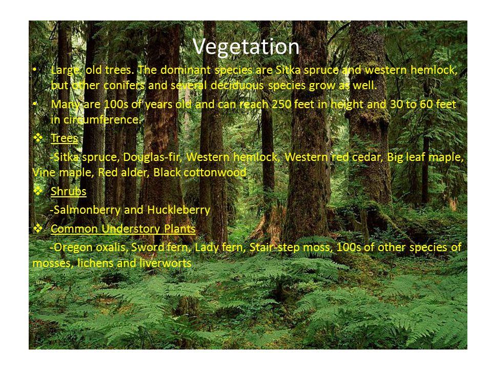 Vegetation Large, old trees.