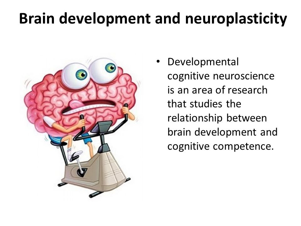 Brain development and neuroplasticity Developmental cognitive neuroscience is an area of research that studies the relationship between brain developm