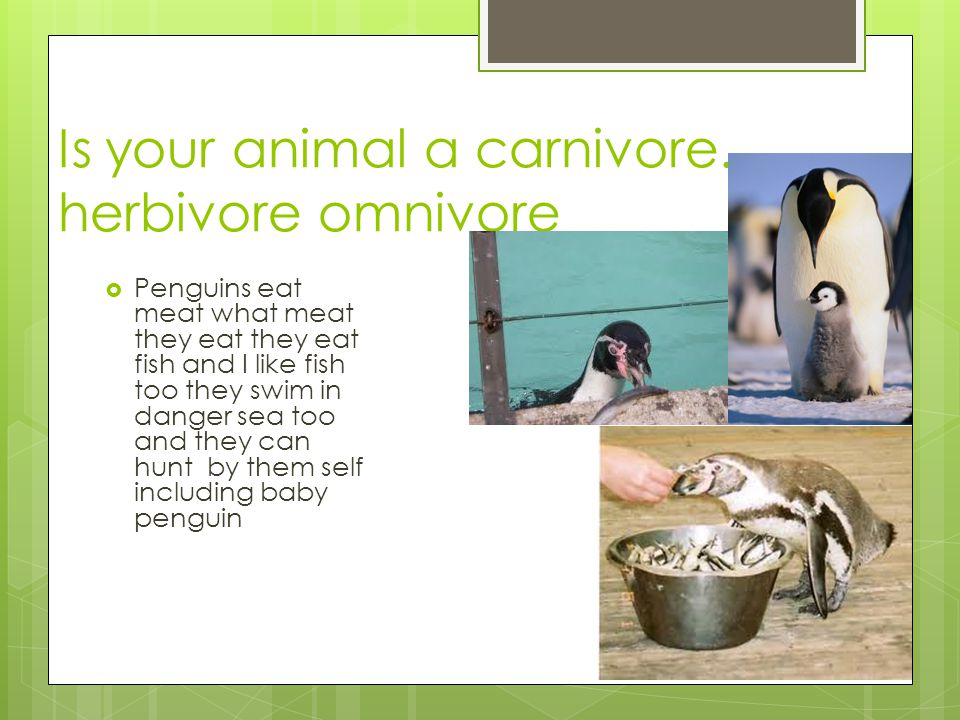 Is your animal a carnivore.