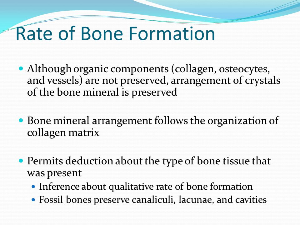 Rate of Bone Formation Although organic components (collagen, osteocytes, and vessels) are not preserved, arrangement of crystals of the bone mineral is preserved Bone mineral arrangement follows the organization of collagen matrix Permits deduction about the type of bone tissue that was present Inference about qualitative rate of bone formation Fossil bones preserve canaliculi, lacunae, and cavities