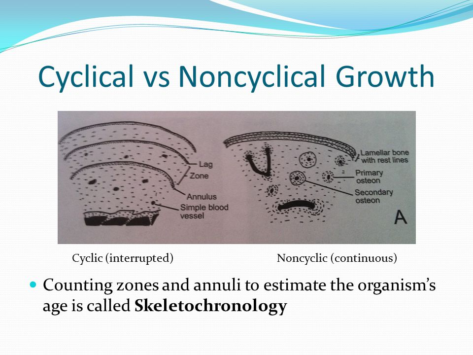 Counting zones and annuli to estimate the organism's age is called Skeletochronology Cyclical vs Noncyclical Growth Cyclic (interrupted)Noncyclic (continuous)